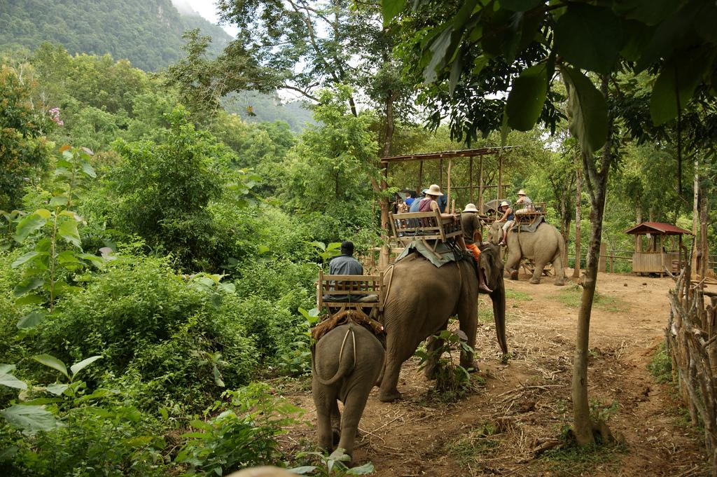 Elephant Trekking Laos - Insight To Asia Tours