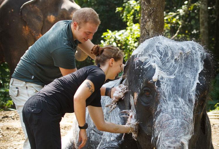 Elephant Experience Elephant Hills Khao Sok - Thailand Tours