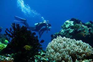 Dive Safari Cebu, Negros And Bohol