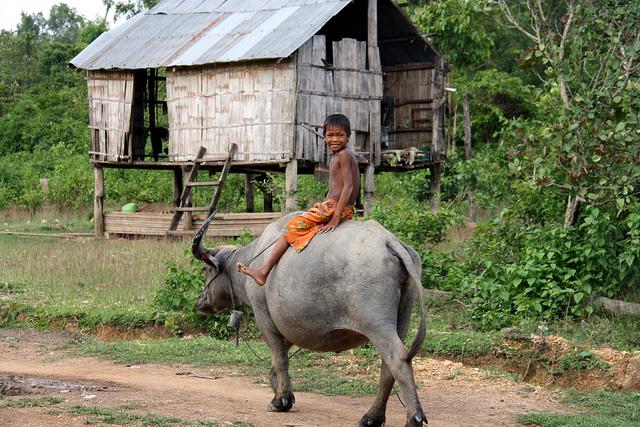 kid on buffalo - Cambodia