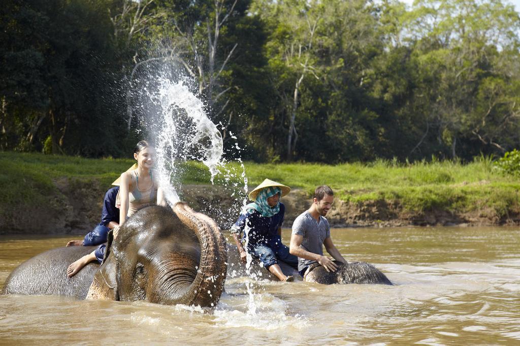 Elephant-Discovery-Camp