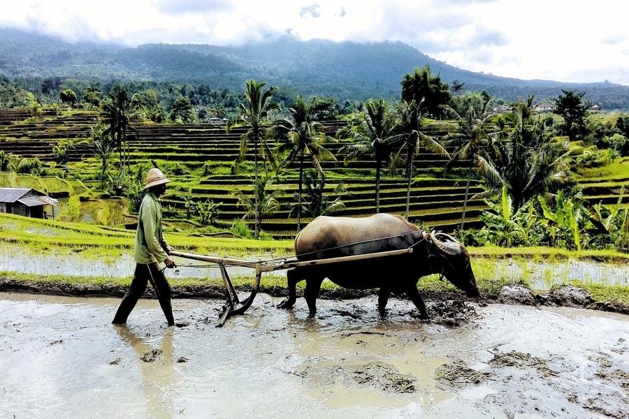 Rejser til Bali