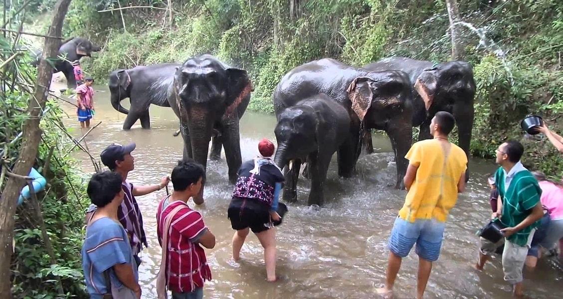 elephant_discovery_c_ixDUn