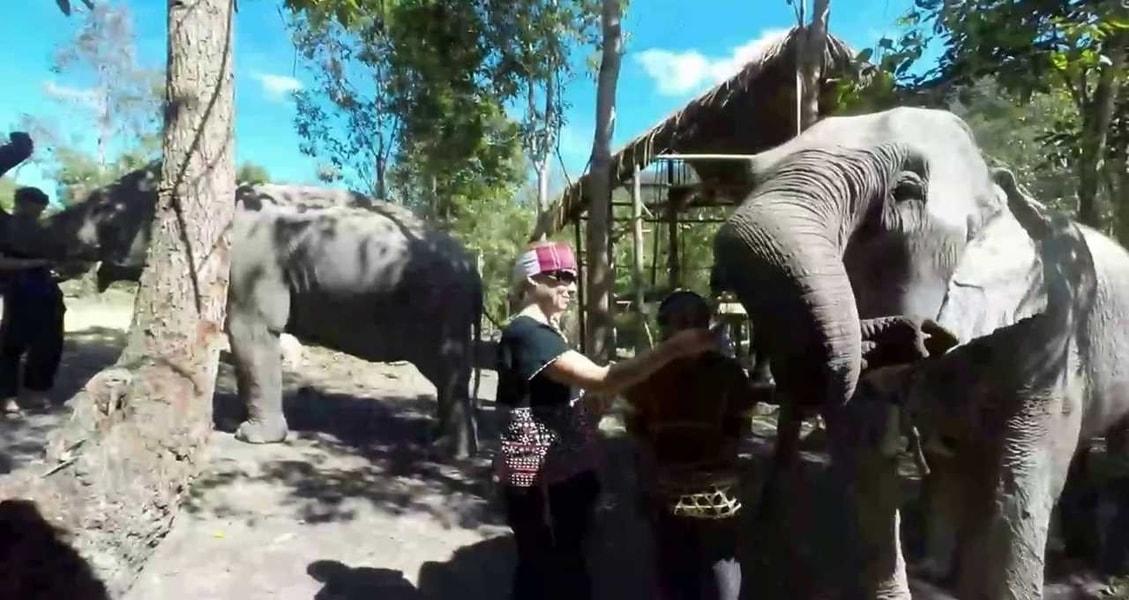 elephant_discovery_c_tCuRM